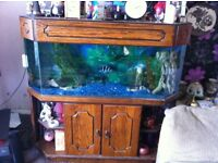 4 foot fish tank, full set up
