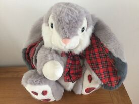 Cute giant bunny needs new home !