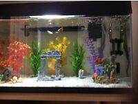 Beautiful aquarium with fish and accessories