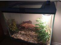 Vivarium / Fish Tank