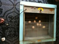 INCUBATOR FOR EGGS FOR SALE £100