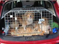 Dog cage for Qashqai, takes 2 small dogs. Emergency escape door at back.