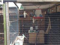 Budgies nest boxes Avairies & extra panels
