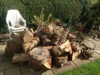 To collect for free soft wood logs