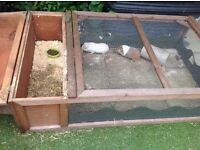 Two super guinea pigs looking for a good home, each one year old, along with hutch/run