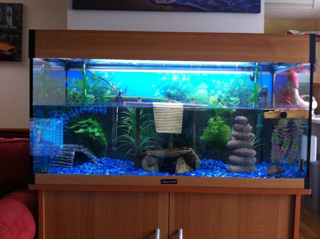 Fish tank and cabinet set-up in Exeter, Devon Gumtree