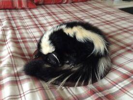 stripped skunk