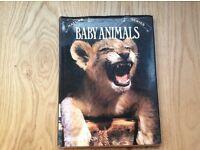 Baby Animals Large Hardback ( Nature Series ) by Jane Sutton
