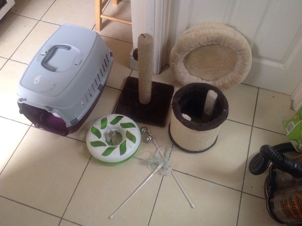 Cat tree/litter,carrier box/food/toys. Make an offer for all the stuff in the pics