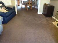 Chocolate brown lounge carpet