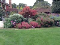 RHS qualified skilled experienced gardener looking for part time work in Berkshire area