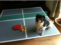 TABLE-TENNIS TABLE TOP FOR SALE
