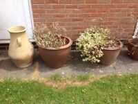 Various clay garden pots £10- £20 some are very large can deliver call 07812980350