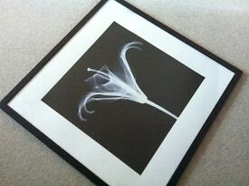Framed lily xray picture