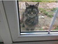 Darkish tabby cat found in Erpingham Ingworth area