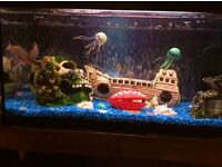 2FT FISH TANK WITH 4 FISH