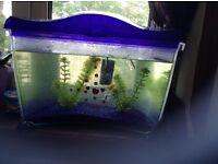 Fish tank + 2 fish