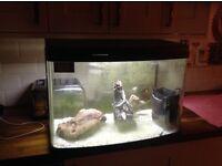 Illuminated Fish Tank