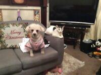 Pet boarding/doggie walks,