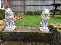 Pair of proud lions in grey