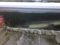 12 fish for sale