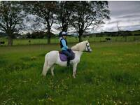 11.1hh family pony/companion for loan