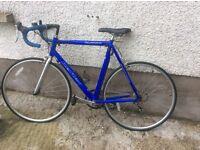 Reflex Alpina Racing Bike