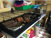LARGE guinea pig cage for sale