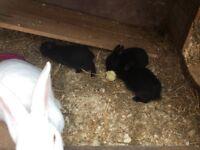 4 baby boy rabbits