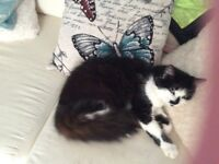 Black and white female cat 14 months old