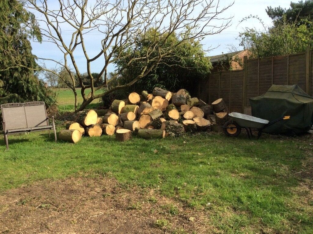 Large Logs from felled Cyprus Trees for firewood / log burner