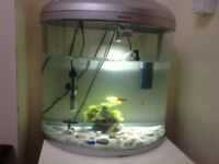 6 fishs and tanke