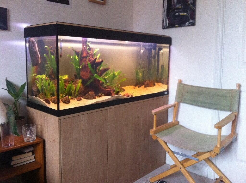 fluval roma 240 litre aquarium in patchway bristol. Black Bedroom Furniture Sets. Home Design Ideas
