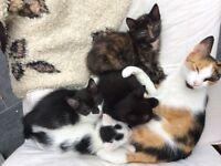 4 kittens 8 weeks