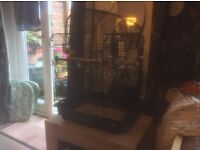 Budgie and cage and few accessories
