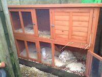 2 Female young rabbits/ hutch/ food ( 2 months old)