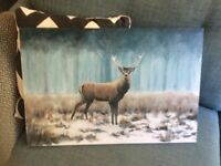 Canvas Picture of a Stag.