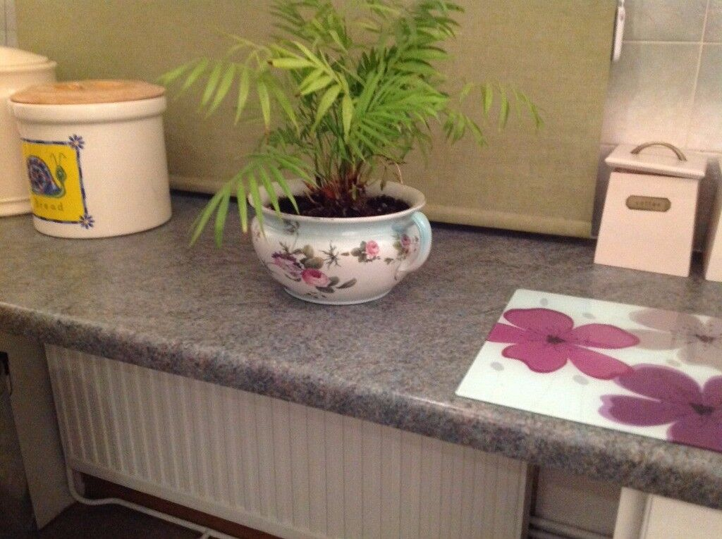 Vintage Bowl with Palm Plant