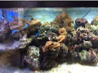 6ftx2ftx2ft marine set up fish tank £350