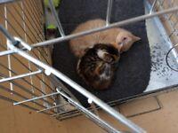 Kittens for saleLovely