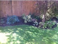 EXPERIENCED GARDENER AND ODD JOB MAN AVAILABLE IN SOUTH BIRMINGHAM