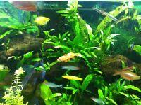 Fish tank juwel 260lt