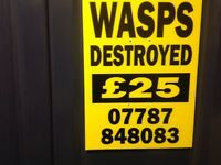 PEST CONTROL WASPS DESTROYED £25