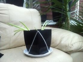 2 baby aloe Vera plants in crystal encrusted plant pot.