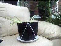 2 baby aloe Vera plants in crystal encrusted plant pot.