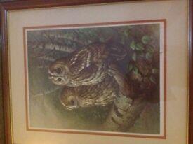 Tawny owl print by Raymond Watson