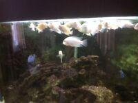 Jewel corner tank
