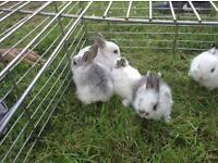 Only 3 adorable baby rabbits left