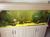 Large Aqua oak aquarium