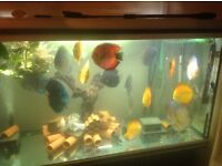 Plecos and Discus for sale in Worcester